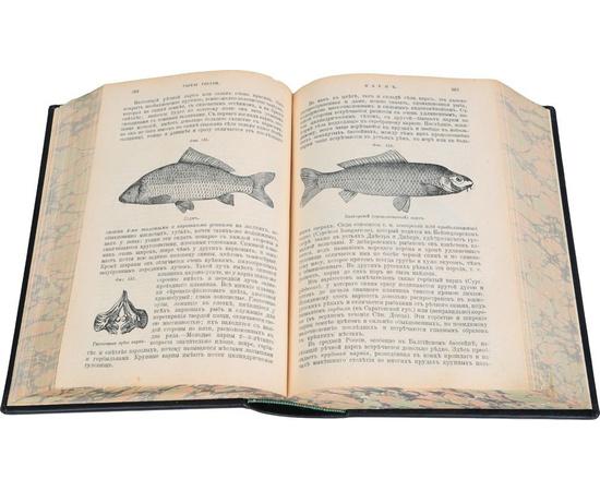 Рыбы России. Жизнь и ловля (ужение) наших пресноводных рыб